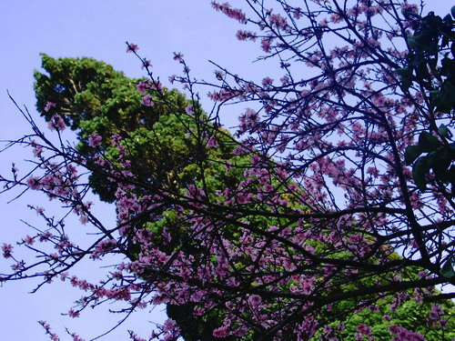 BLOOMY TREE